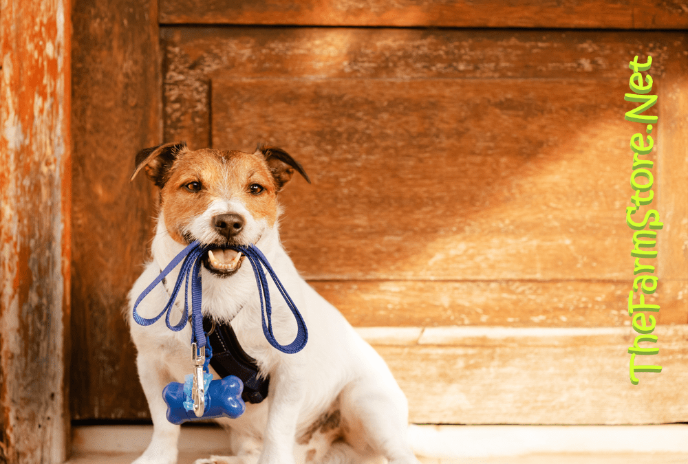 Best Puppy Harness