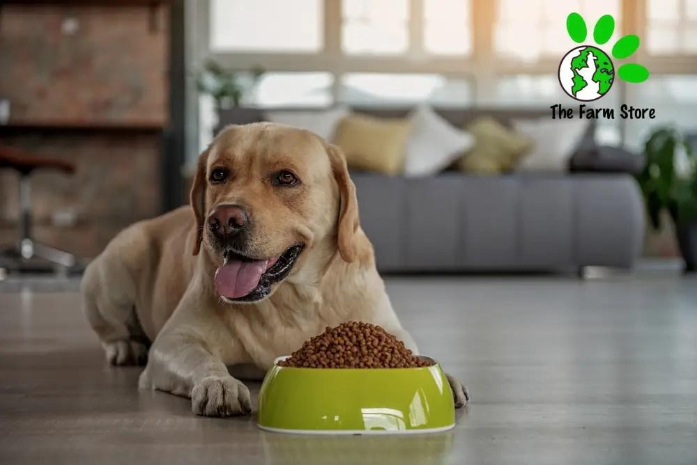 MOIST DOG FOODS