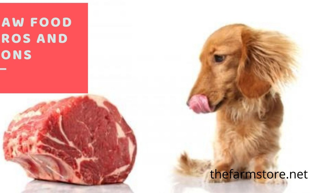 Pros and Cons of Raw Dog Food Diet