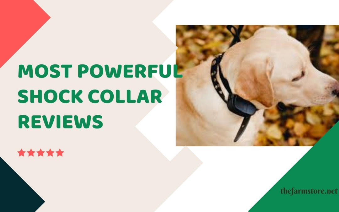 Most Powerful Shock Collars