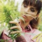 The Hidden Antibiotic Potential of Cannabis