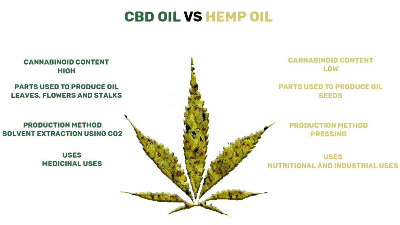 CBD Oil vs Hemp-1