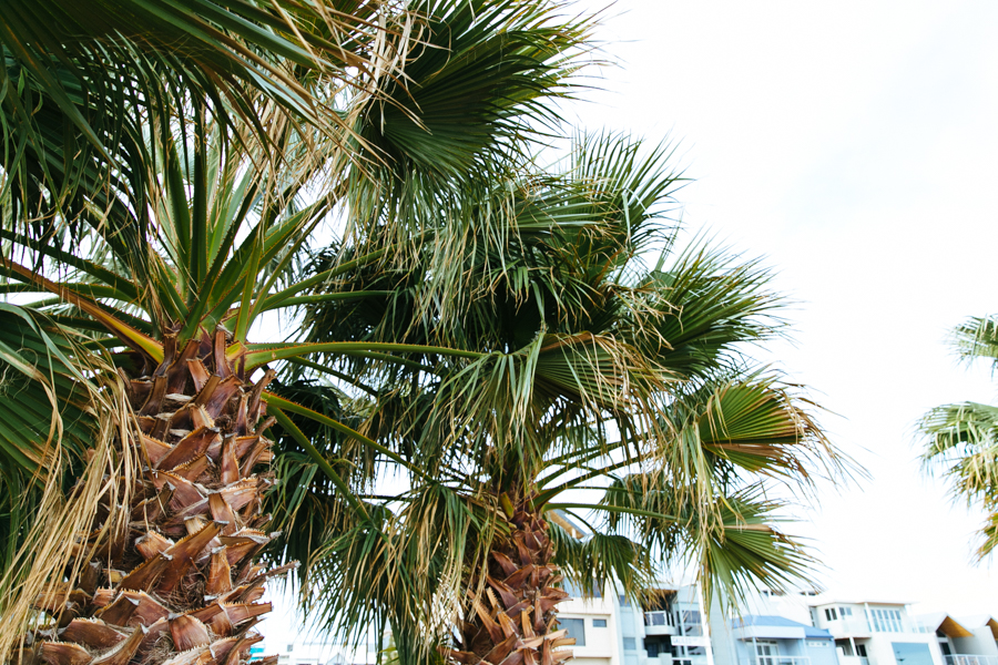Mandurah palm trees.