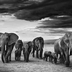 Family,-Amboseli,-Kenya