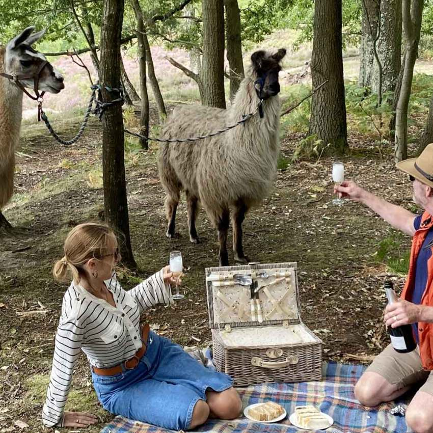 Picnic with the Llamas at the Merry Harriers