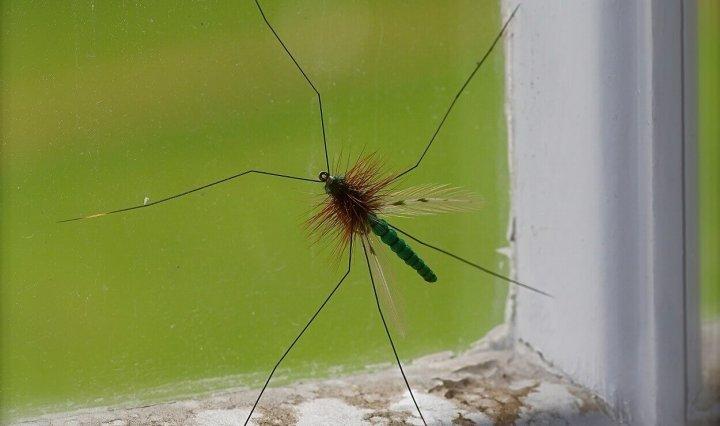 daddy long legs dry fly foam