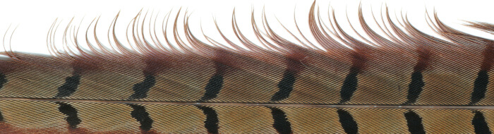 Pheasant tail fly tying materials
