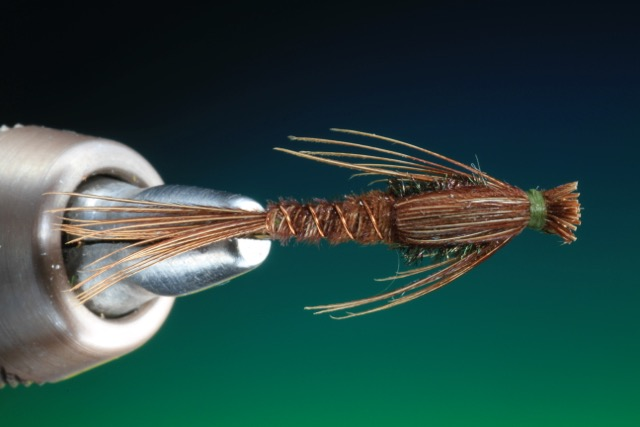 fly tying Pheasant tail nymph
