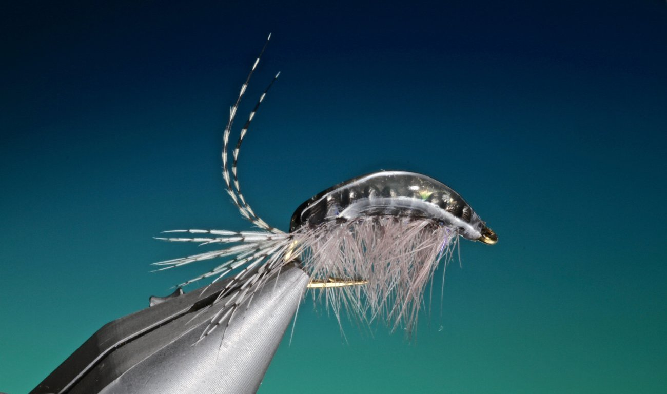 fly tying Gammarus shrimp