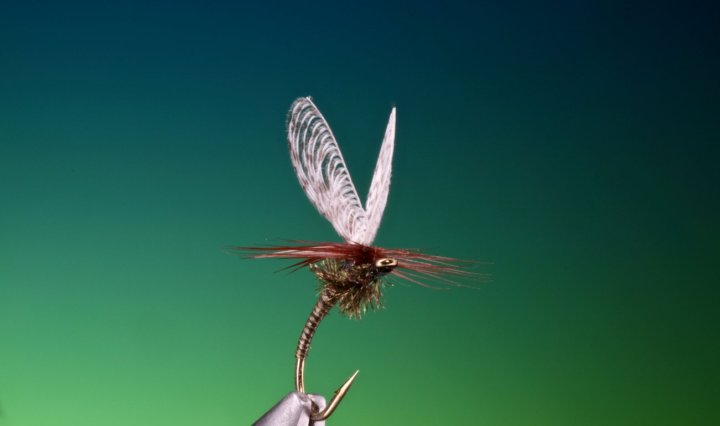 fly fishing flies Wally wing quill emerger