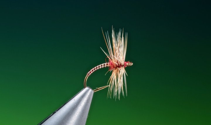 pay day midge tied by Barry Ord Clarke