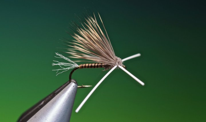 X-Factor Caddis tied by Barry Ord Clarke
