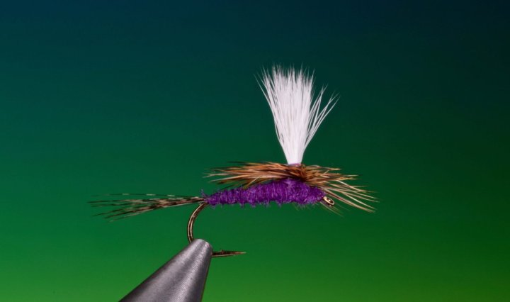 fly tying Purple Haze parachute