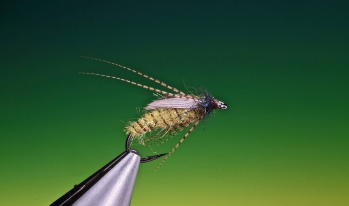 Solomon caddis pupa variant tied by Barry Ord Clarke