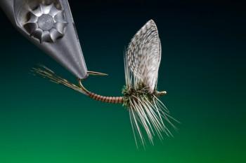 mayfly dun small