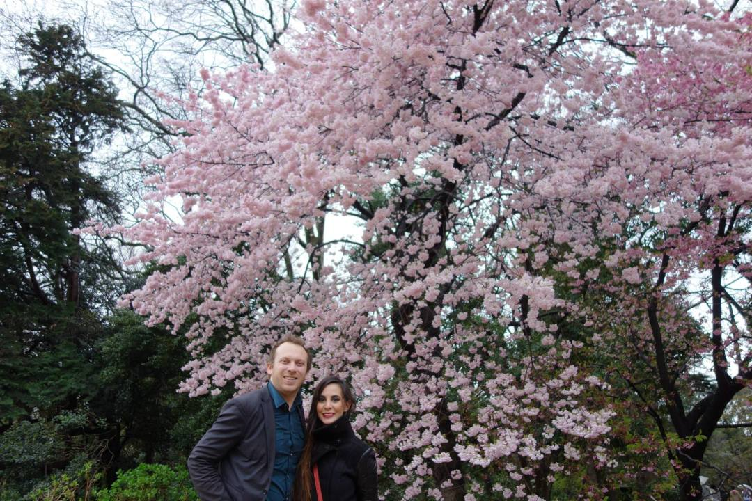 Hanami, or cherry blossom viewing, at Shinjuku Gyoen