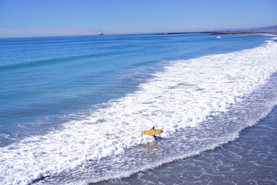 Fox's First Trip to the Beach - TheFebruaryFox.com