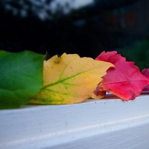 Turning Over a New Leaf: Handling Transitions