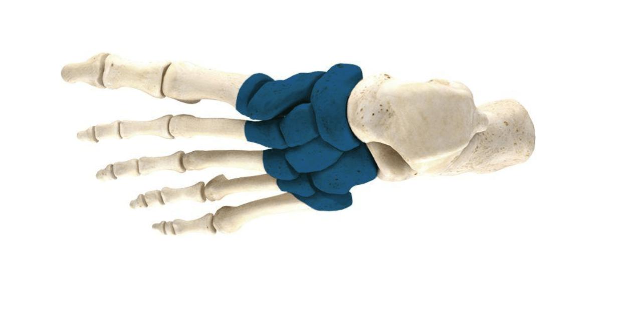 Mid foot pain area