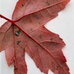 October Freebie - Leaf-10x13
