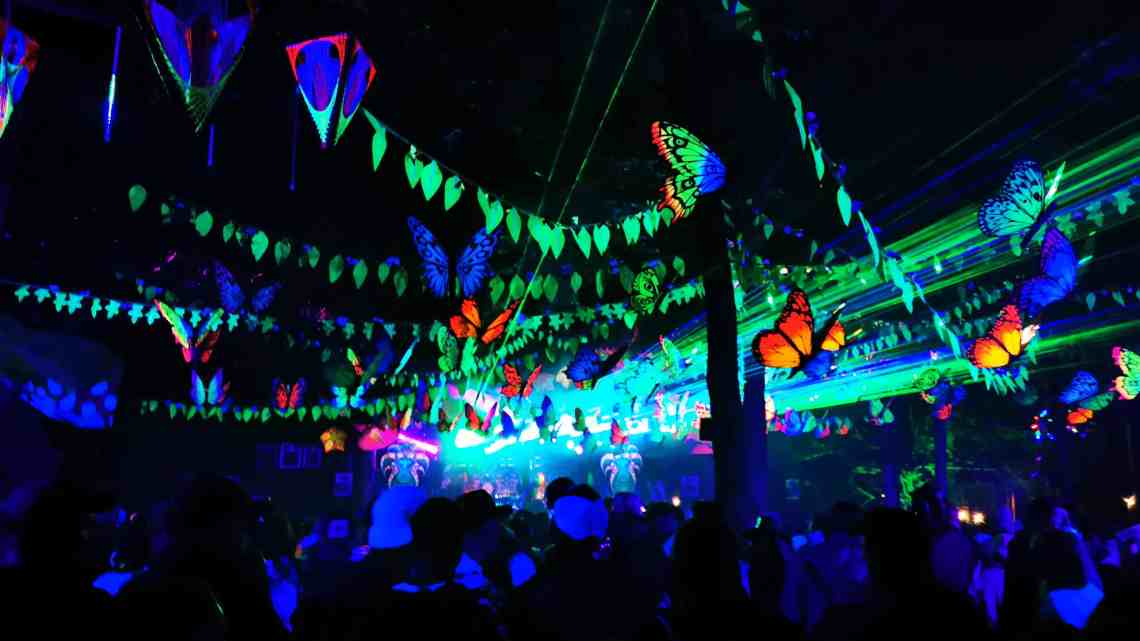 Tribe of Frog Boomtown 2019