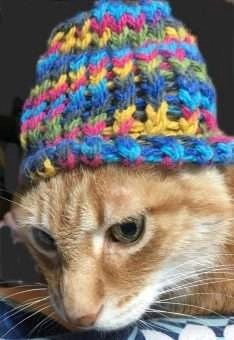 Baxter Cat in the Hat-Loom Knitting