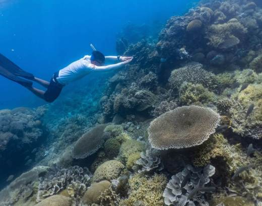Freediving in Philippines: Freediving Schools, Online Community, Shops and Gears that you SHOULD know 11