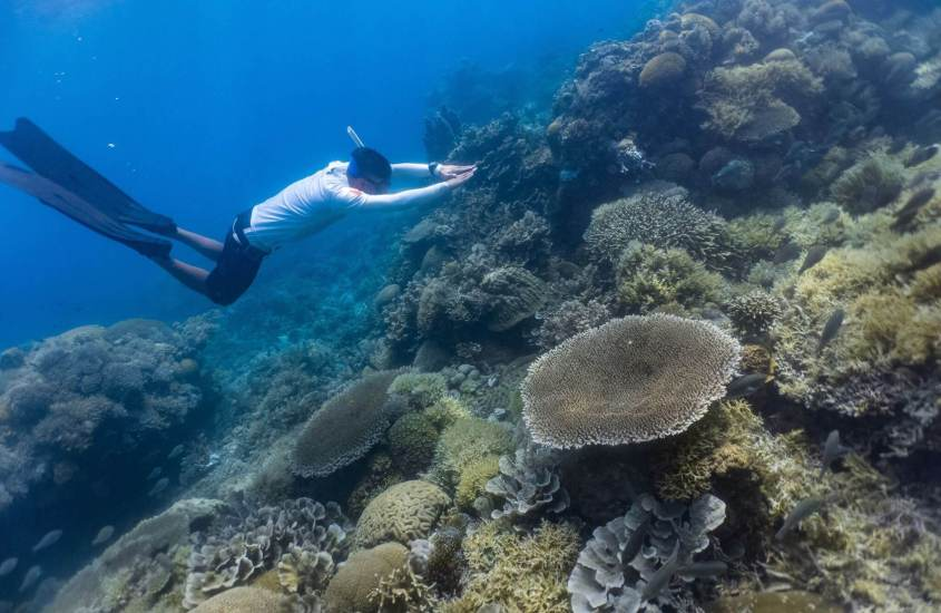 Freediving in Philippines: Freediving Schools, Online Community, Shops and Gears that you SHOULD know 12