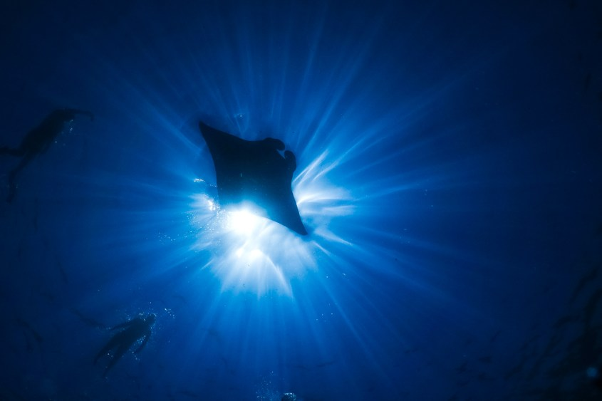 13 Amazing Wildlife Encounters in the Ocean from Different Parts of the World 2