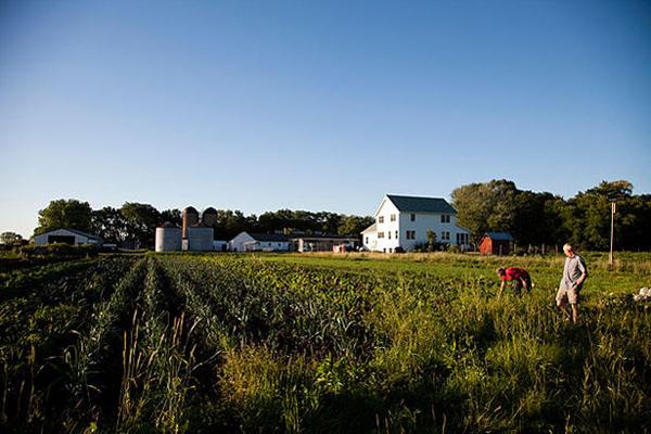 Sandhill Organics at Prairie Crossings, photo by Michael Hanson