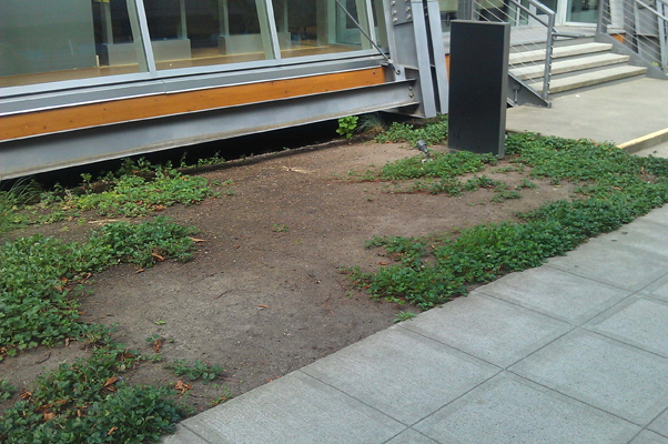Effects of dog waste on groundcover