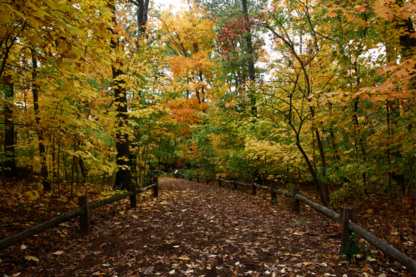 The New York Botanic Garden's Thain Family Forest image: Alexandra Hay
