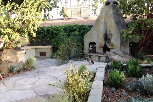 Drought tolerant planting at the Los Angeles Arboretum image: Gary Lai