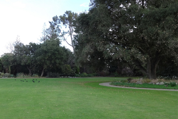 Lawn, native oaks, and path with plants found in the west from Canada to Mexico image: Chris Pattillo