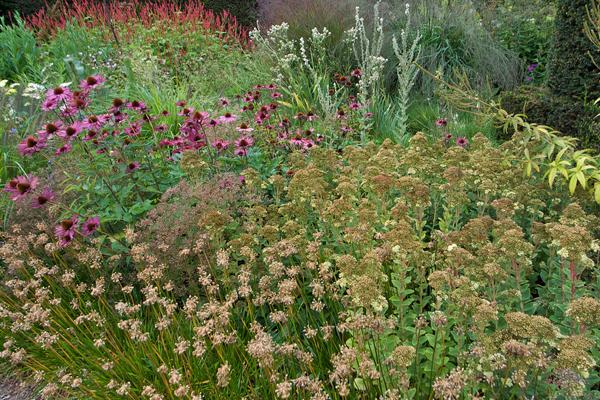 Piet Oudolf Garden: Grass Days 2009, Hummelo, Netherlands image: Tony Spencer via thenewperennialist.com