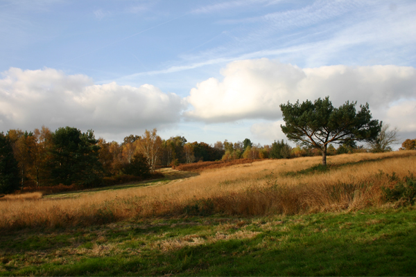 Open space in Ashdown Forest image: Peter Westwood via Flickr