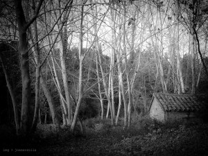 Image Source: Joan Sorolla, Flickr, Creative Commons Little house in the Dark Forest
