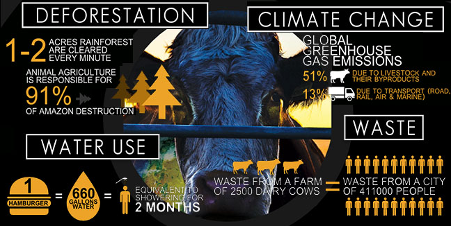 Image result for animal agriculture climate change
