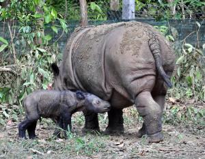 Image Source: International Rhino Foundation, Flickr, Creative Commons Ratu and Baby