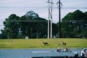 The Alpaca Chase