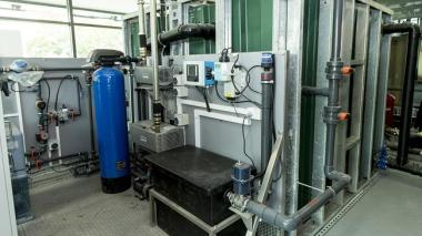 The black water plant