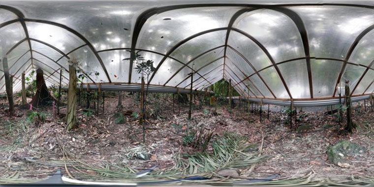 Tinder-dry understorey at the Daintree Drought Experiment. Yoav Daniel Bar-Ness