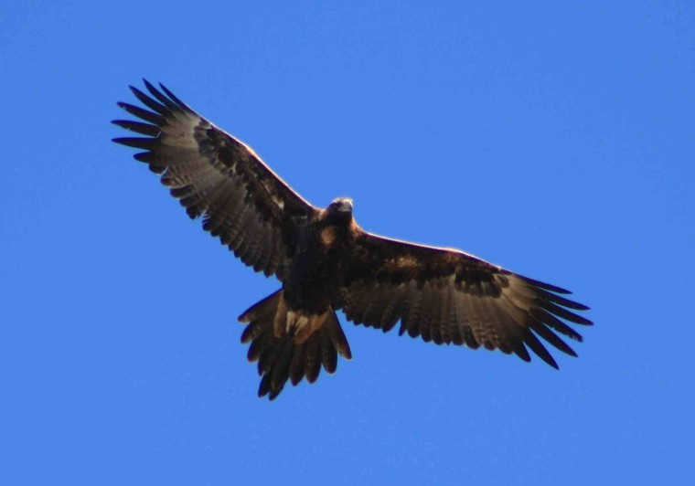 Get eagle eyed when you're hunting for your next star recruit