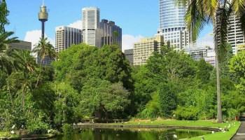 Sydney park green infrastructure