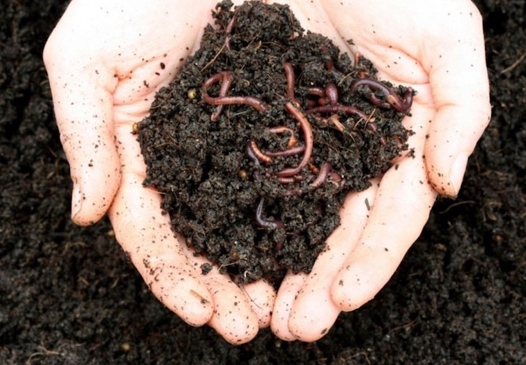 hands holding dirt and worms sustainability
