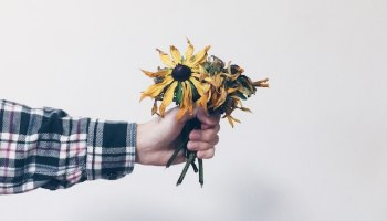 Hand holding dead flowers NSW