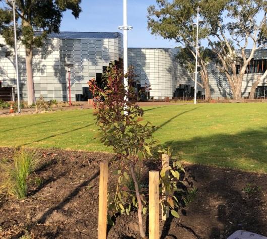 Royal Hobart Hospital garden