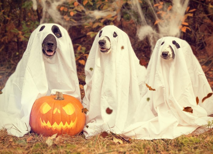 Retirement Planning and Halloween