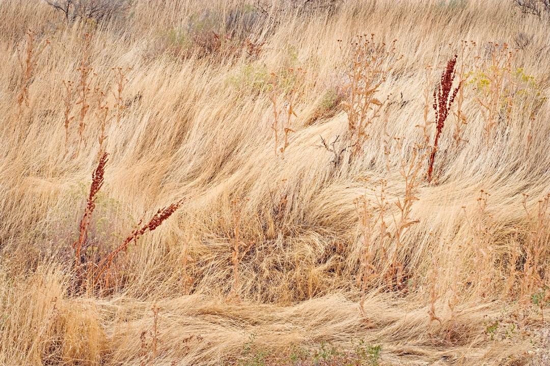 Autumn Grasses Design