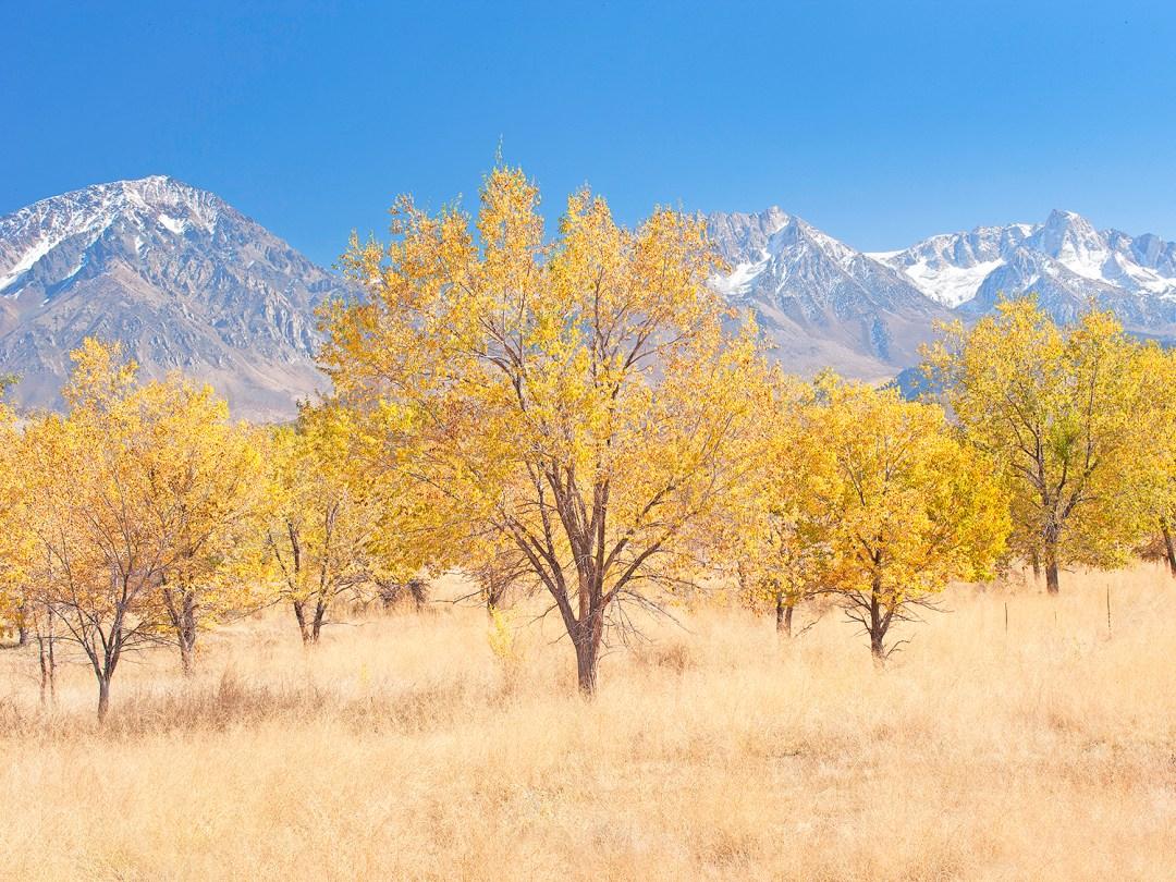 Bishop Autumn Pasture #1